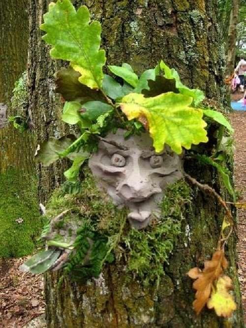 Tree Clay face TCR Hub